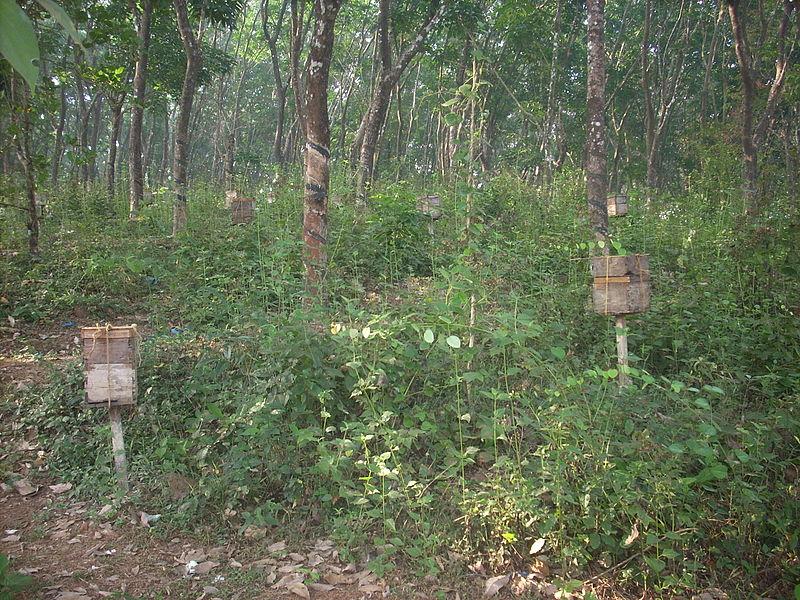 File:Mk's trip Kannur 2012 DSCN2669.JPG