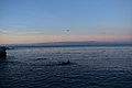 Monterey Bay 10 2018-01-23.jpg