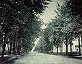 Montréal, vers 1905-1910. Ave. de Lorimier. (6429268719).jpg
