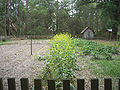 Morningside Nature Center LHF crops01.jpg