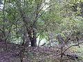 Morysin - zespół pałacowo-parkowy - domek stróża - bagienna fosa.jpg