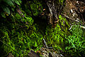 Mossy overgrowth, Thirteen Levels (14982052852) (2).jpg