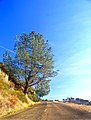 Mount Diablo Access Road.jpg