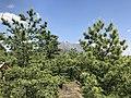 Mount Sakurajima from Tsukiyomi Shrine 3.jpg
