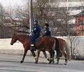 Mounted Police in Helsinki Finland.jpg