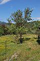 Mtskheta Farmland.jpg