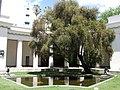 Museo de Bellas Artes (2).jpg