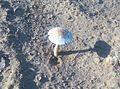 Mushroom in sunrays.jpg