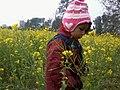 Mustard Farm in Nepal.jpg