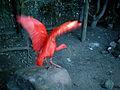Mysterybird.jpg