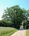 ND-01173 Lkr. AÖ Kapelleneiche in Tyrlaching.jpg