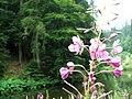 NP TARA - Cvet u krupnom planu.jpg