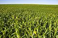 NRCSND07001 - North Dakota (717296)(NRCS Photo Gallery).jpg