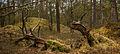 Nationaal Park Drents-Friese Wold. Locatie Dieverzand. Dode boom, belangrijke voedselbron in evenwichtig biotoop 01.jpg