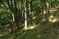 Natural monument Krásná stráň in 2014 (6).JPG