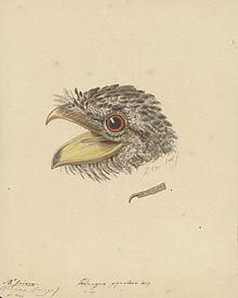 Wikipedia TalkWikiProject Birds Archive 67