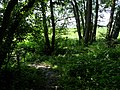 Naturdenkmal Hasequelle Wellingholzhausen Melle -Hase Wald Dschungel- Datei 1.jpg