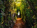 Nature Tunnel by AkosMediaOfficial.jpg