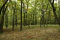 Nature reserve Zvolská homole in autumn 2014 (4).JPG