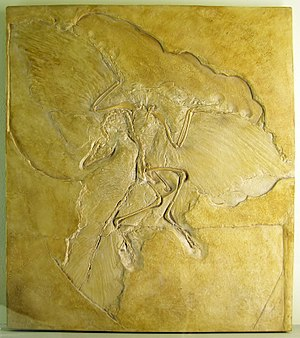 Bird - Archaeopteryx lithographica is often considered the oldest known true bird.
