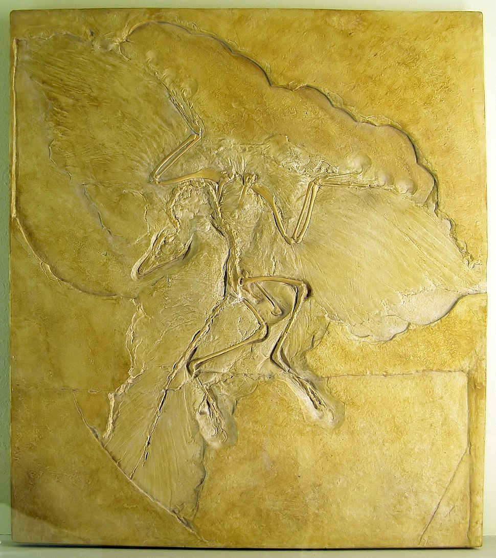 Slab of stone with fossil bones and feather impressions