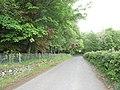 New hedge - geograph.org.uk - 440149.jpg