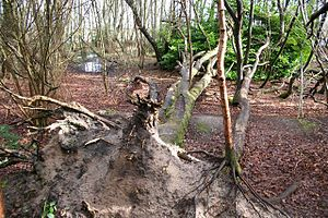 English: New life from old A fallen tree by th...