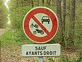 Nogent-sur-Vernisson-FR-45-forêt des Barres-a5.jpg