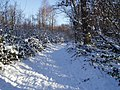Norsey Snowscene - Round the Bend - geograph.org.uk - 1074924.jpg