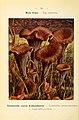 Nouvel atlas de poche des champignons comestibles et vénéneux (6459648097).jpg