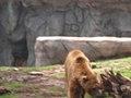 OKC Zoo May 2007 - 26 (497211720).jpg