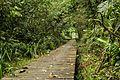 O trapiche no Acaraí.jpg