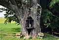 Oak at Hersberg, Luxemb 01.jpg