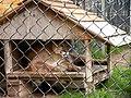 Oaklawn Farm Zoo, May 16 2009 (3538891365).jpg
