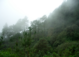 Sierra Sur de Oaxaca - Landscape of the Sierra Sur. Fog banks are frequent throughout the year.