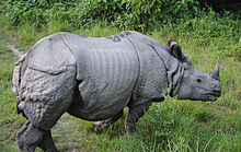 5. Indian rhinoceros
