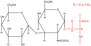 Oligosaccharide - An example of O-Linked oligosaccharide with β-Galactosyl-(1n3)-α-N-acetylgalactosaminyl-Ser/ Thr.