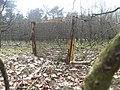 Orchard - panoramio (10).jpg