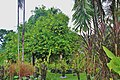 Orchid Garden Bali Indonesia - panoramio (27).jpg