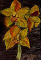 Orchids yellow.jpg
