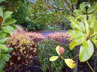 Oregon Garden - Image: Oregon Garden NW garden deep 2007 12 23 15 40 19 0096
