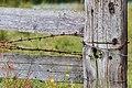 """Osterholz-Scharmbeck, Naturschutzgebiet """"Breites Wasser"""" -- 2018 -- 3045.jpg"""