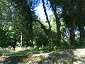 Otok-Lištica01410.JPG