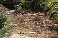 Pájara La Lajita - Oasis Park 21 ies.jpg