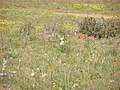 P9210014 Tienie Versfeld Wildflower Reserve.JPG