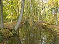 PA281649 Oelerbeek herfst.JPG