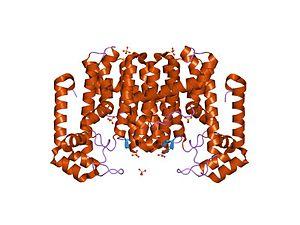 All-trans-octaprenyl-diphosphate synthase - Image: PDB 1v 4e EBI