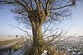 PM 023592 B Oudenaarde.jpg