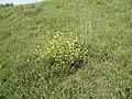 Paesaggio argine Adige nei pressi dell'Oasi WWF Bojo della Ferriana (Concadirame, Rovigo) 03.jpg