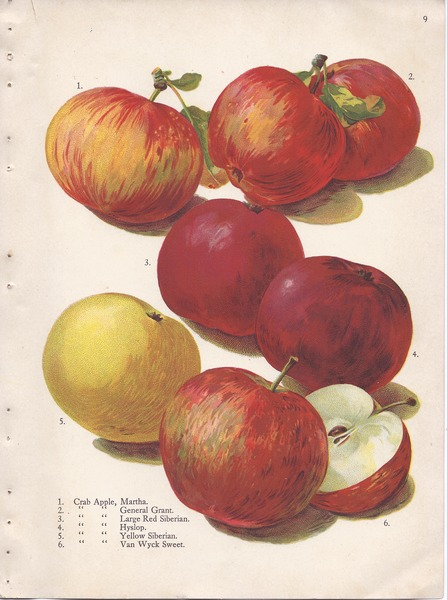 File:Page 9 apple - Martha, General Grant, Red Siberian, Hyslop, Yellow Siberian, Van Wyck Sweet.tiff